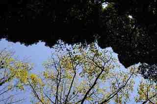 奈良_0137.jpg
